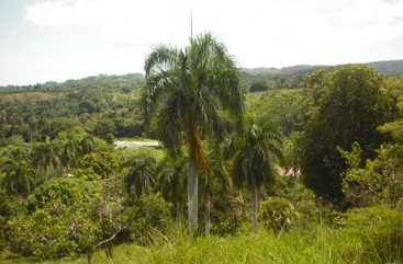Small Farmland with Marvellous View Sosua