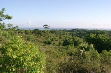 Beautiful hillside land in popular area