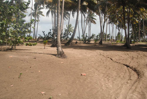 #6 Spectacular Parcel of Beachfront Land in Nagua