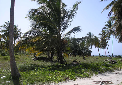 #1 Huge Beachfront Property near Bavaro