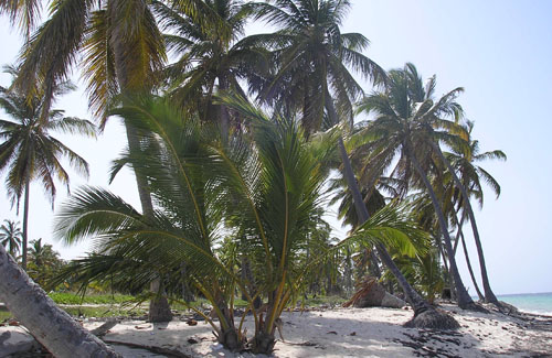 #2 Huge Beachfront Property near Bavaro