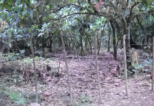 #2 Cacao Production Farms for sale