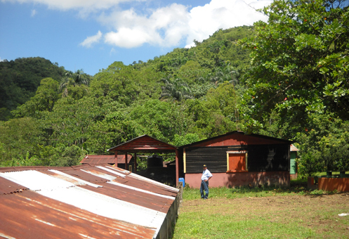 #1 Cacao Production Farms for sale