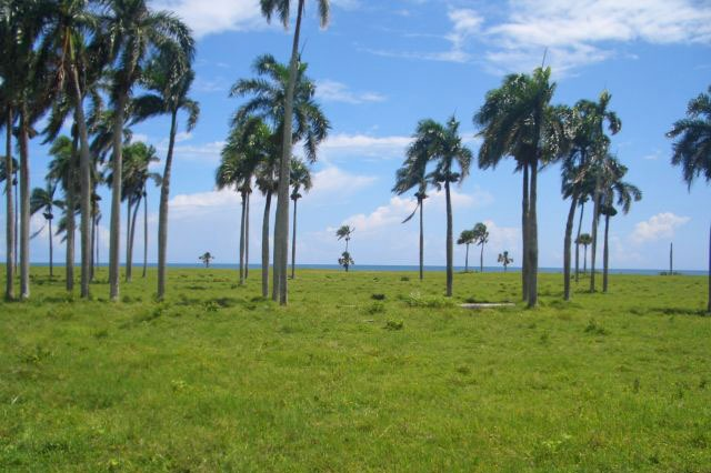 #1 Beachfront Property near Cabarete