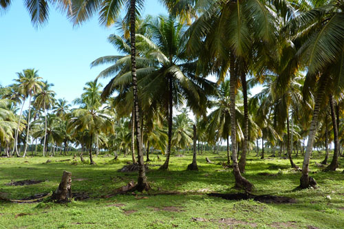 #3 Stunning beachfront land with wide frontage in Samana