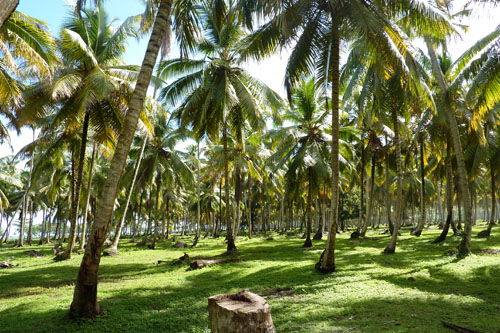 #4 Stunning beachfront land with wide frontage in Samana