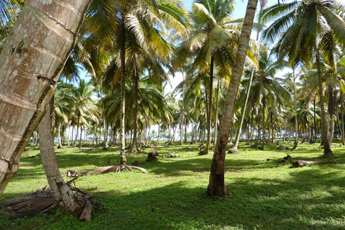 #8 Stunning beachfront land with wide frontage in Samana