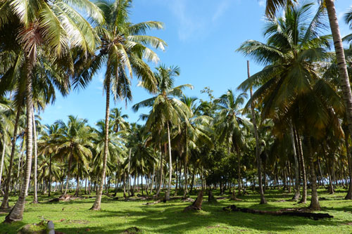 #5 Stunning beachfront land with wide frontage in Samana
