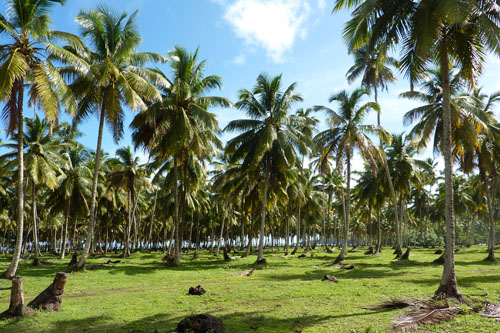 #0 Stunning beachfront land with wide frontage in Samana