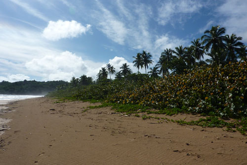 #7 Stunning beachfront land with wide frontage in Samana