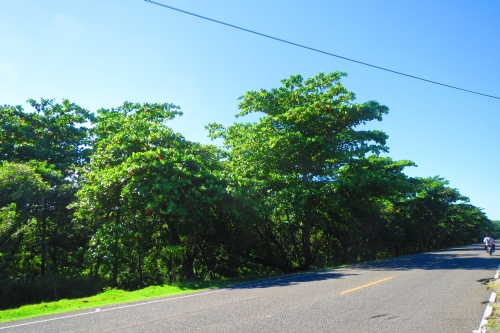#0 Prime development land located on main highway close to Cabarete