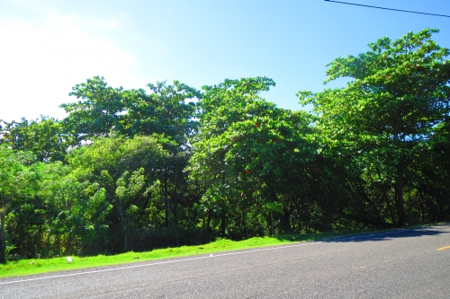 #1 Prime development land located on main highway close to Cabarete