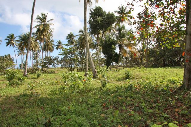 #5 Beachfront Lot in Cabarete with 150 meters beachfront