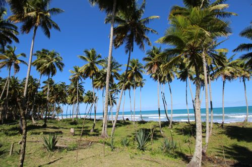 #3 Excellent beachfront lot in unspoilt location