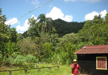Cacao Production Farms for sale