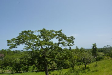 Lot with Ocean View in Sosua