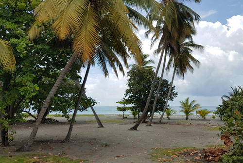 #4 Beachfront land in a quiet area of high quality properties - Bani