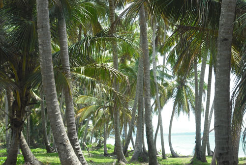 #4 Spectacular Parcel of Beachfront Land in Nagua