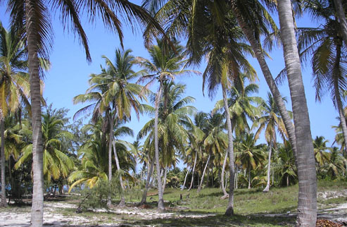 #3 Huge Beachfront Property near Bavaro