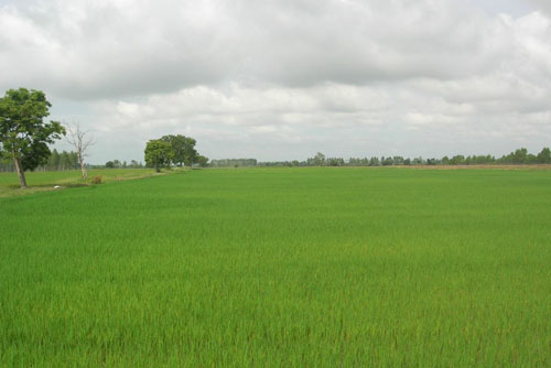 #2 Rice Farm with over 15000 acres for sale - San Francisco-Nagua
