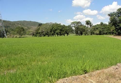 #0 Rice Farm with over 15000 acres for sale - San Francisco-Nagua