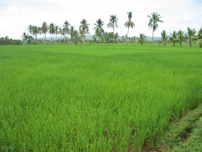 #6 Rice Farm with over 15000 acres for sale - San Francisco-Nagua