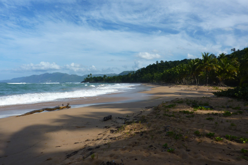 #1 Nice Beachfront land in Samana