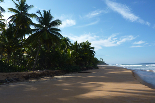 #0 Nice Beachfront land in Samana