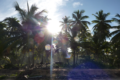 #5 Nice Beachfront land in Samana