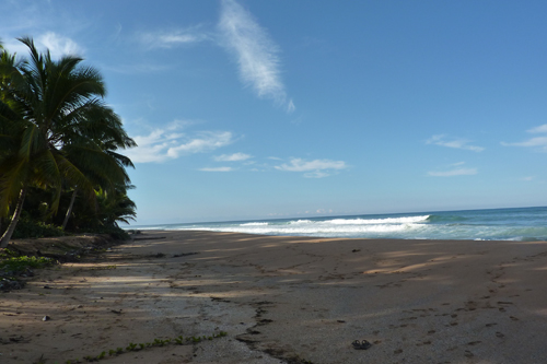 #6 Nice Beachfront land in Samana