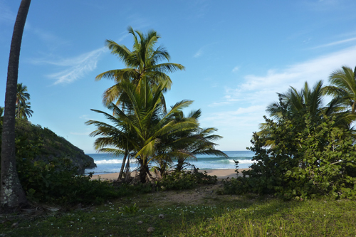 #3 Nice Beachfront land in Samana