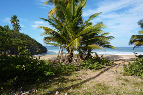 #7 Nice Beachfront land in Samana