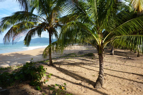#9 Nice Beachfront land in Samana