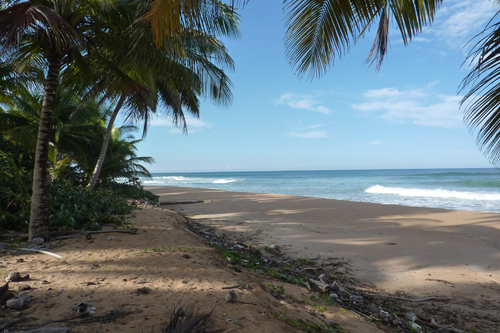 #4 Nice Beachfront land in Samana