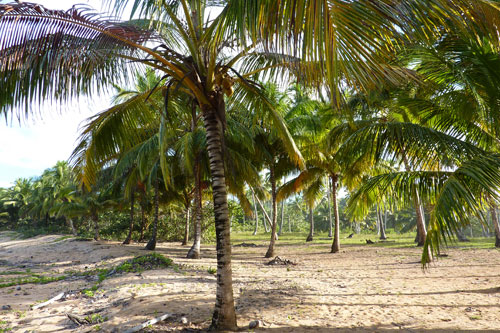 #8 Nice Beachfront land in Samana