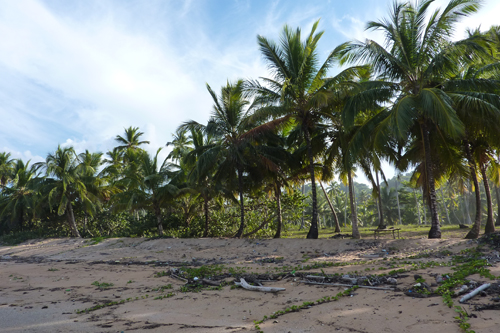 #2 Nice Beachfront land in Samana