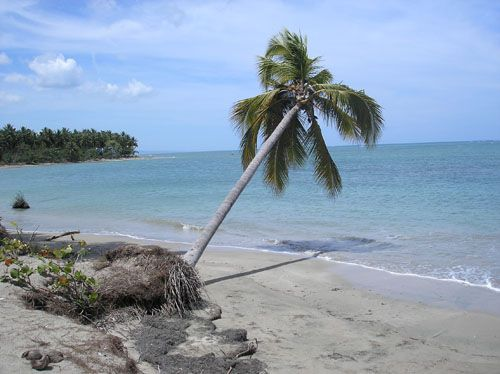 #1 Beachfront property with over 1,000 meters water frontage
