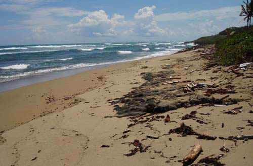 #2 Prime beachfront land for sale in Cabarete