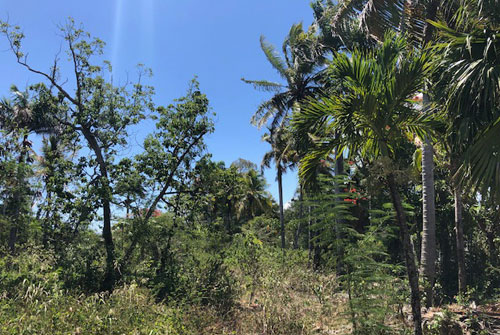 #5 Commercial lot on main highway, close to downtown Sosua