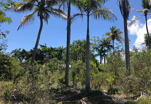 #6 Commercial lot on main highway, close to downtown Sosua