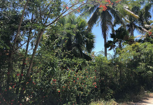 #8 Commercial lot on main highway, close to downtown Sosua