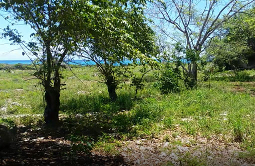 #8 Beautiful oceanfront land at very competitive price